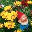 Carte postale Martin le coquin dans les fleurs 2